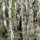 Paperbark Swamp Reflections. by Alwyn Simple