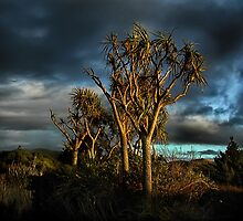 Sun Kissed Cabbage Tree Goodnight by Linda Cutche