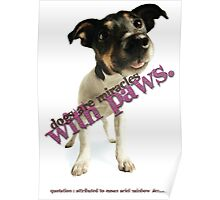 Miracle With Paws Poster
