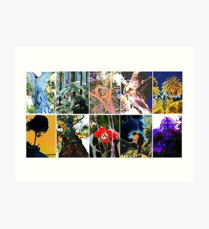 Ten Australian Trees Art Print