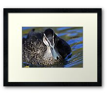 Duck close up Framed Print
