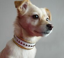 Princess and her new golden collar by KanaShow