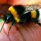 Handmade bumblebee by fenist