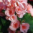 Lovely Flora by Rainy