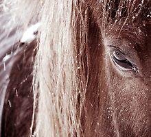 8.2.2011: Bemused by Petri Volanen