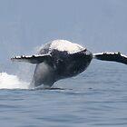 Humpback Breach by Bob Moore