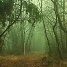 Winter Forest by marens
