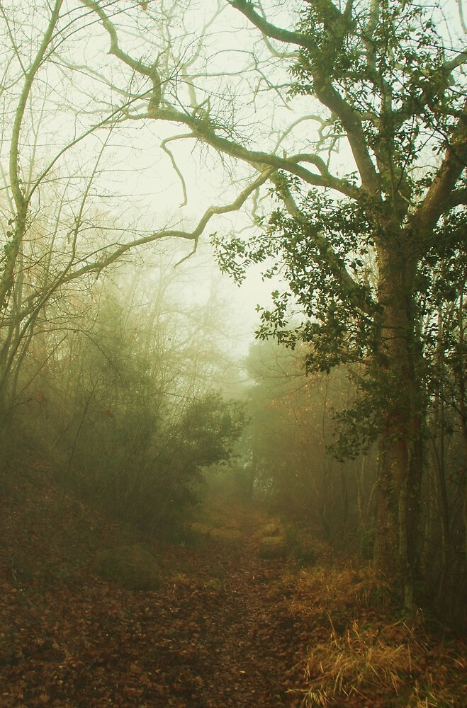 Misty Forest by marens
