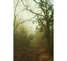 Misty Forest Photographic Print