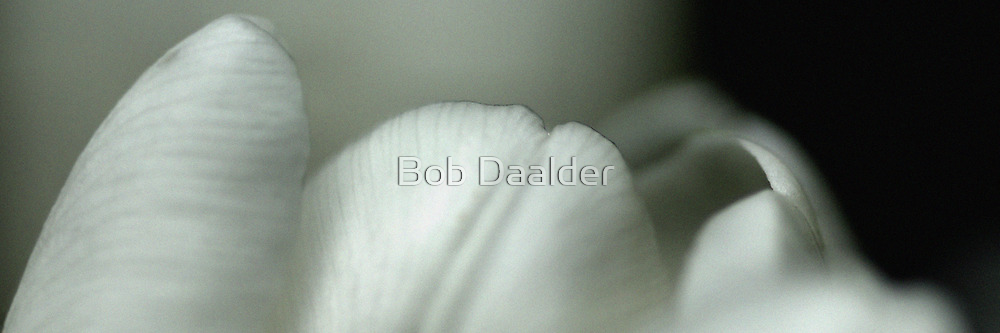 Serene Tulip by Bob Daalder