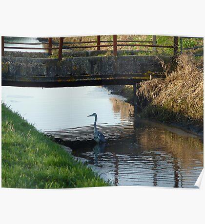 Heron under bridge! Poster