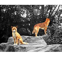 Protector Photographic Print