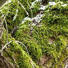 mossy tree trunk by KSissy