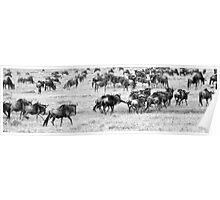 Wildebeest Stampede Poster
