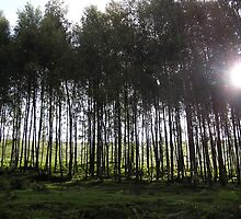 Birch Grove, Overstones Farm, Peak District by Agaricus