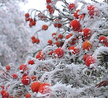 Ice Berries by Mark Whitehouse