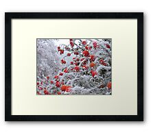 Ice Berries Framed Print