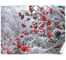 Ice Berries Poster