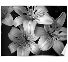 Asiatic Lilies Poster