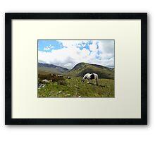 Grazing On Snowdon Framed Print