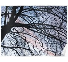 sunrise through a leafless tree Poster
