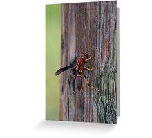 Brown wasp gathering fibers Greeting Card