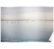 Birds on Lake Michigan Poster