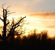 Sunset Silhouette by Dean Messenger