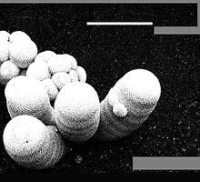 cactus coli by calcidiscus