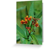 Yellow wasp on Scarlet Milkweed Greeting Card