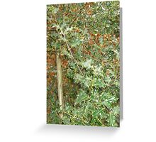 Holly, Moorhaven woods Greeting Card