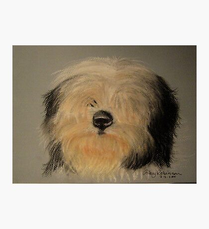 Bearded Collie sketch Photographic Print