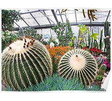 Cactus Cacophony Poster