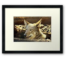 Red Wolf ~ Always Alert Framed Print