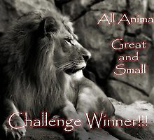 All Animals Great & Small - Challenge Winner Banner by Scott Denny