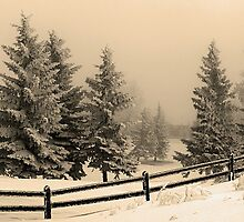 Winter Fog by Michael Collier