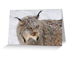 Canada Lynx Greeting Card