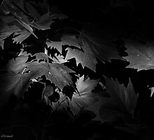 Hide & Seek by ANINDO MOBIN AHMED