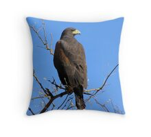 Harris's Hawk ~ Non-Captive Throw Pillow