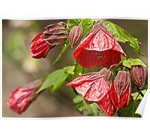 Little Red Bells Poster