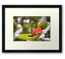 St Lucia Beauty Framed Print
