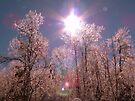 Winter Optics by NatureGreeting Cards ©ccwri