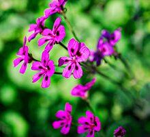 Pretty in Purple by Saija  Lehtonen