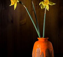 Dying Daffs by Tony Cave