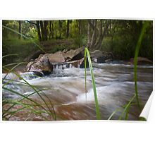 Beside the Creek - Goongerah National Reserve Poster