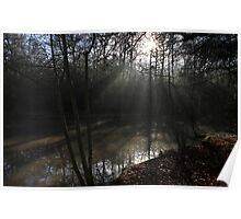 The Sun in the Woods Poster