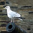 Port Isaac Seagull by David Wilkins