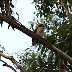 Baby Kookaburra by Vanessa Barklay