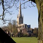 Norwich Cathedral thro' the branches by BizziLizzy