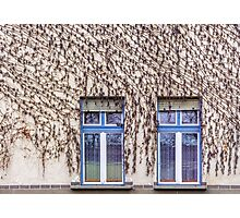 Grape Vine Facade Photographic Print